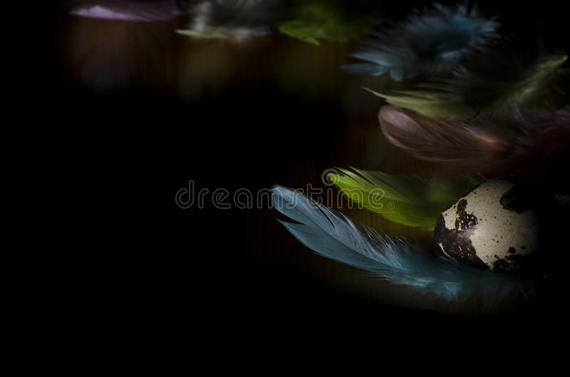 Quail egg and coloured feathers. Quail egg and coloured feathers on the dark background stock photo