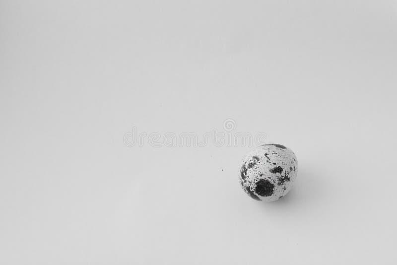 Quail egg. On a white background stock photo