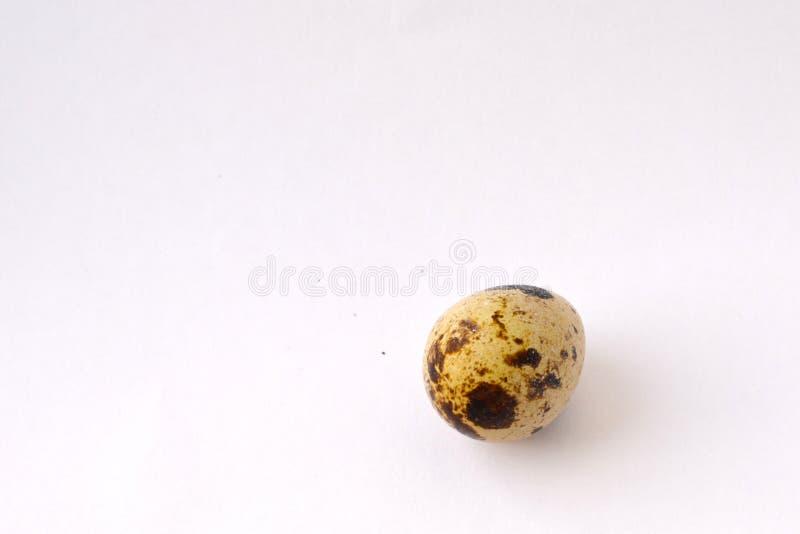 Quail egg. On a white background royalty free stock photos