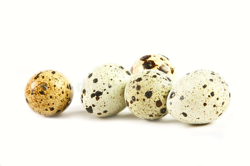 Download Quail eggs stock image. Image of healthy, white, closeup - 17078393