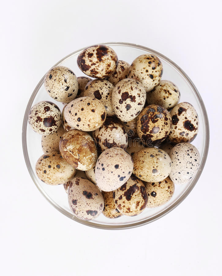 Download Quail eggs stock photo. Image of nutrient, isolated, farm - 20087186