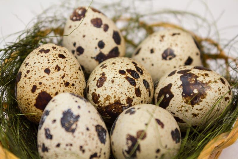 Download Quail eggs stock image. Image of motley, cuisine, gourmet - 24317629