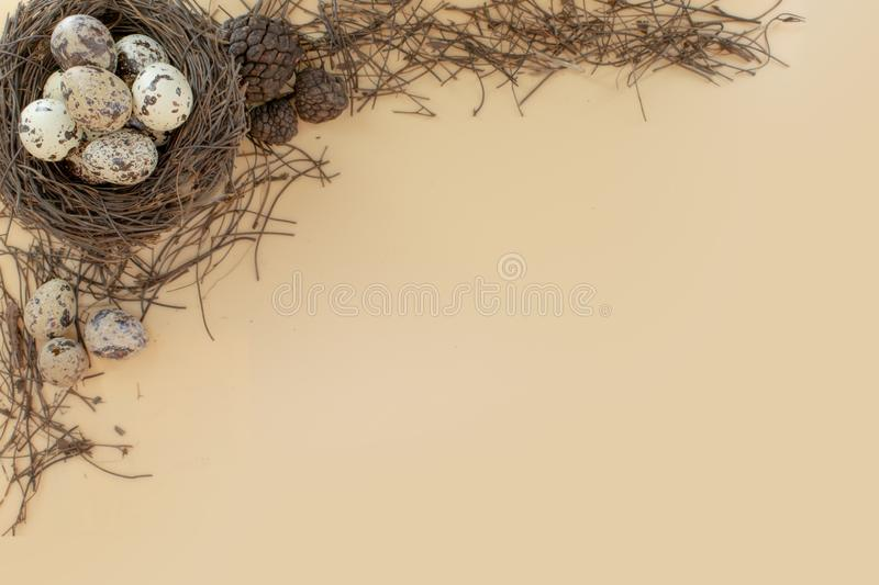 Quail eggs in a bird nest upper corner top view. Quail eggs in a bird nest upper corner  view, space, writing, write, empty, nature, spring, tree, branche royalty free stock photos