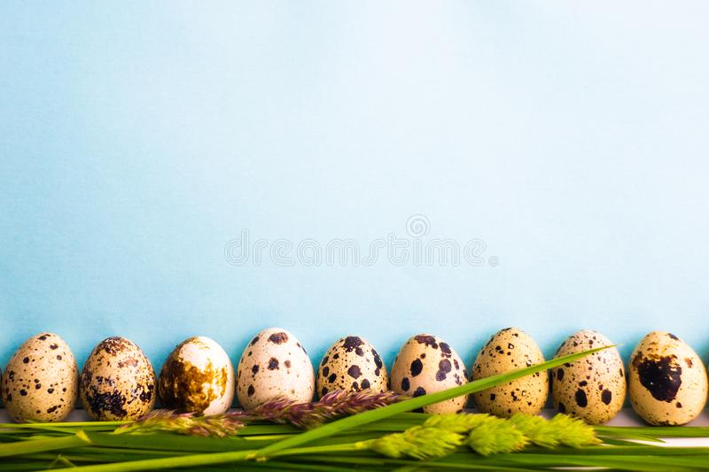 Quail eggs on a blue background stand in the grass nearby. stock photography
