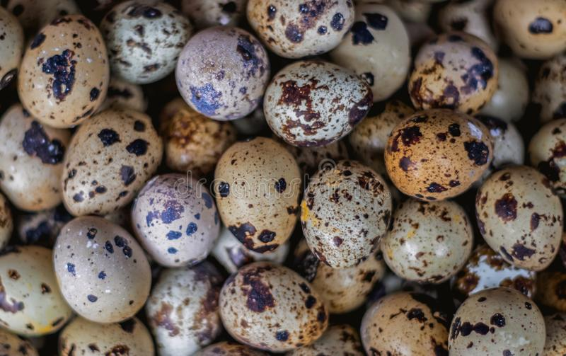 Quail eggs close up royalty free stock photography