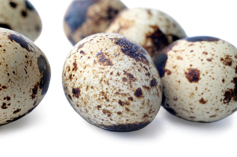 Download Quail Eggs Closeup Isolated On White Stock Image - Image: 25471475