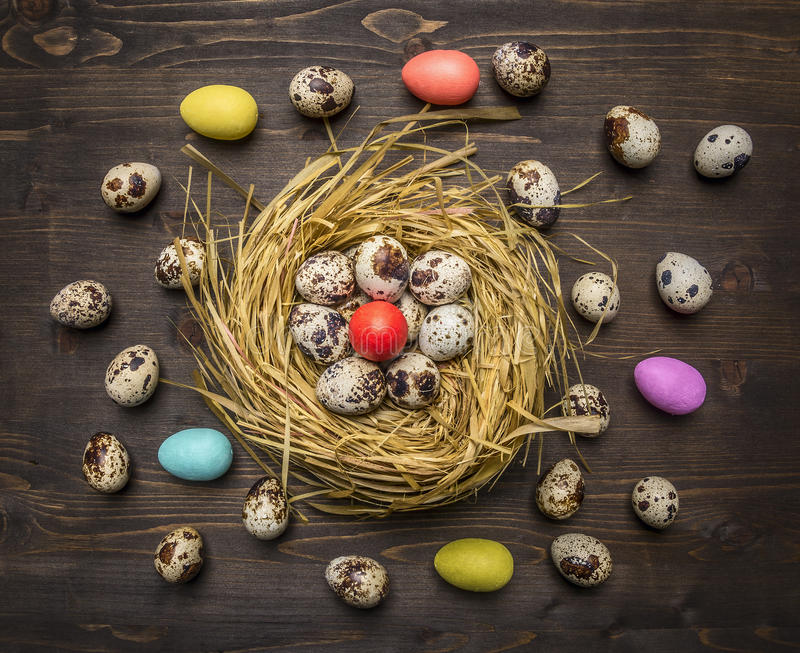 Quail eggs and colored decorative eggs in the nest border ,place for text on wooden rustic background top view close up royalty free stock images