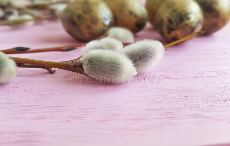 Quail eggs easter peace branch nature of a beautiful decoration willow tradition on a pink wooden background. Quail eggs easter branch willow on a pink wooden stock photo