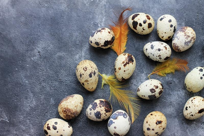 Quail eggs with feathers on dark background. Easter holiday background. Quail eggs with orange feathers on dark background. Easter holiday background stock photography