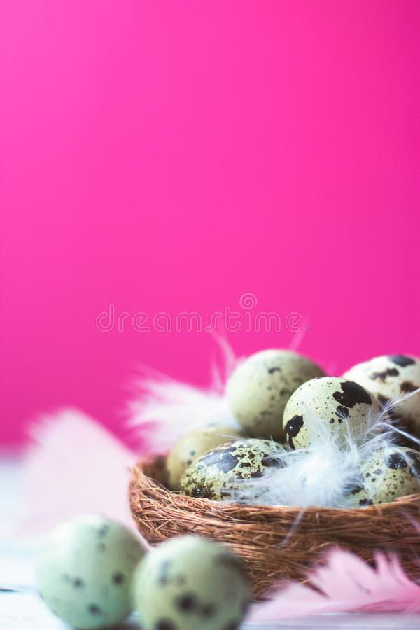 Quail eggs and feathers in small nest, on white wooden background against pink wall; copy space; easter background royalty free stock images