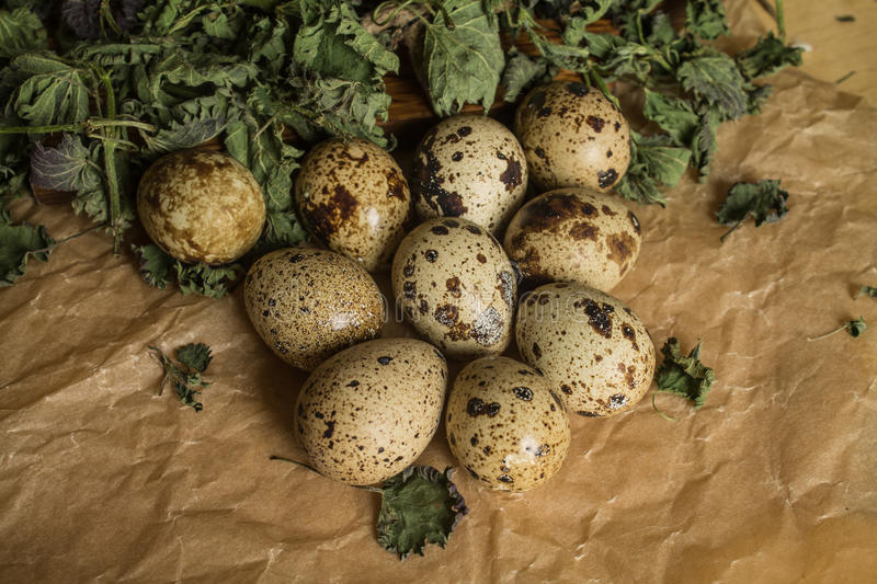 Quail eggs group royalty free stock photography