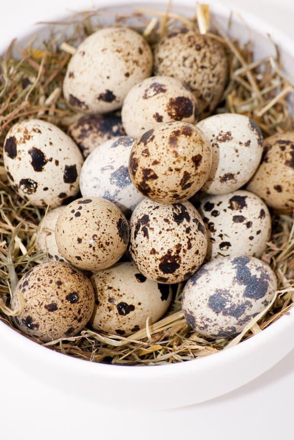 Download Quail eggs stock image. Image of freckle, eggs, partridge - 43024765