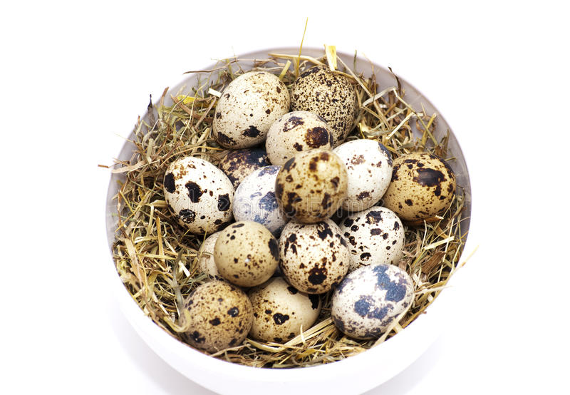 Download Quail eggs stock photo. Image of freckle, gradation, chicken - 43024816