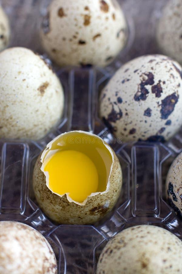 Quail Eggs, macro. Shelled egg stock photos