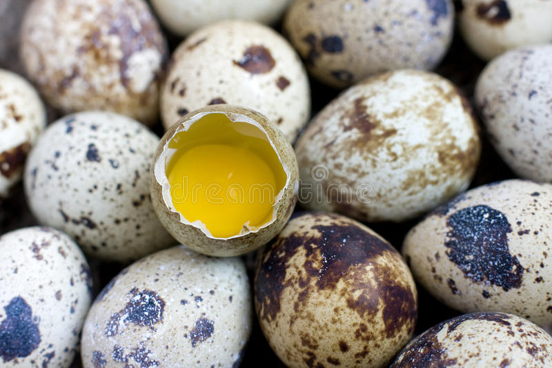 Quail Eggs, macro. Shelled egg royalty free stock images