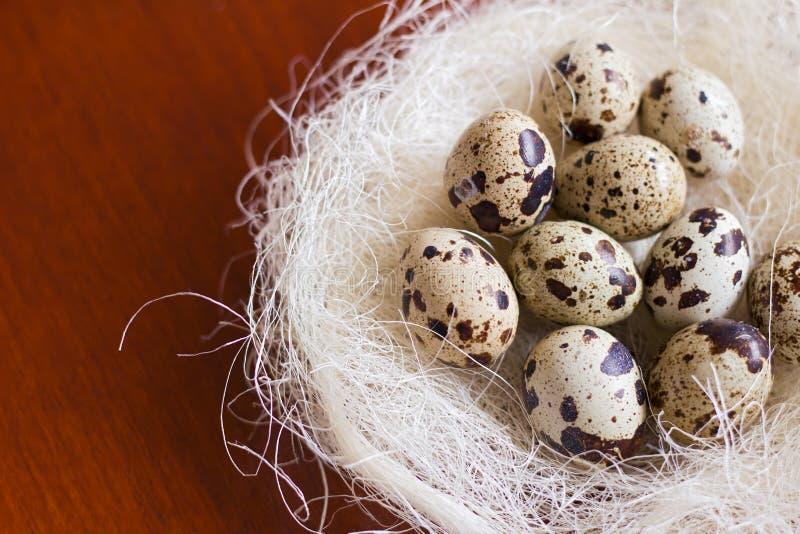 Quail eggs stock images
