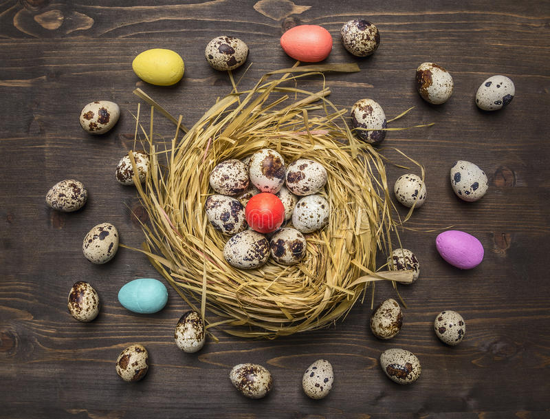 Quail eggs in a nest with colorful decorative eggs for Easter laid out around wooden rustic background top view close up. Quail eggs in a nest with colorful royalty free stock photo