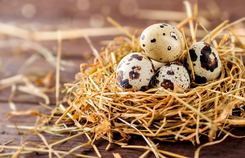 Quail eggs in a nest of dry grass, hay, on a wooden background. Easter festive background royalty free stock photo