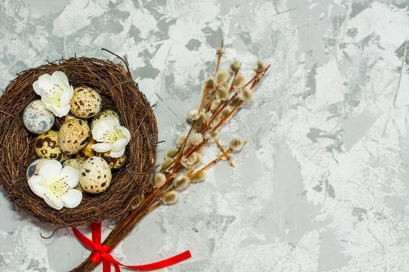 Quail eggs in the nest and willow branch royalty free stock image