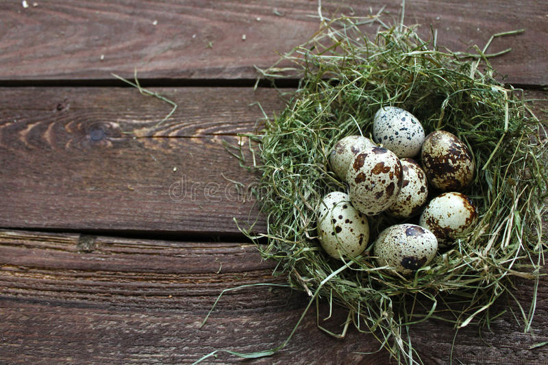 Quail eggs. In a nest on a wooden background royalty free stock images