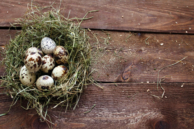 Quail eggs. In a nest on a wooden background royalty free stock photo