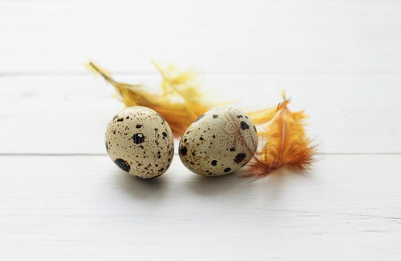 Quail eggs with orange feathers on wooden background. Easter holiday background. Quail eggs with orange feathers on light wooden background. Easter holiday stock images