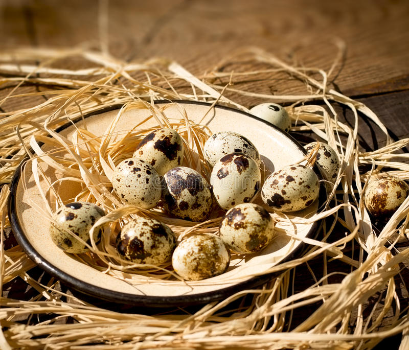 Quail eggs in plate royalty free stock image