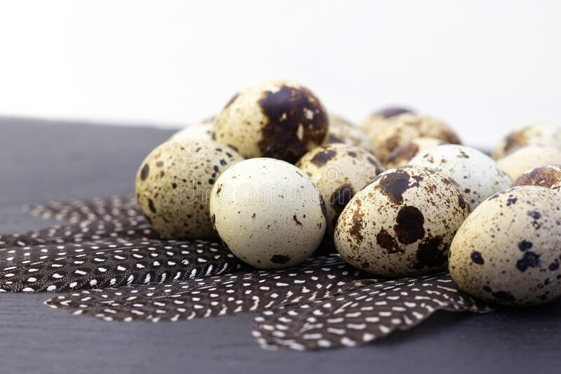 Quail eggs. On a dark background. with quail feathers stock image