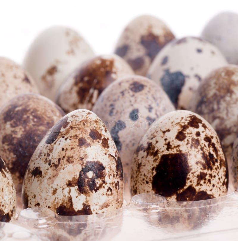 Quail eggs in a row on white