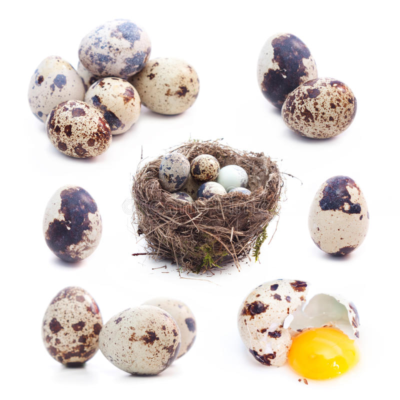 Quail eggs set: single, group, nest, broken stock photo