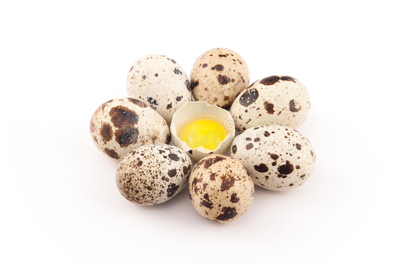 Quail eggs on a white background. Fresh quail eggs on a white background royalty free stock image