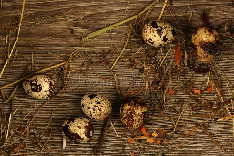 Quail eggs on a wooden stock image