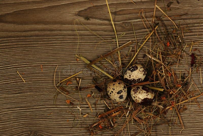 Quail eggs on a wooden royalty free stock photos