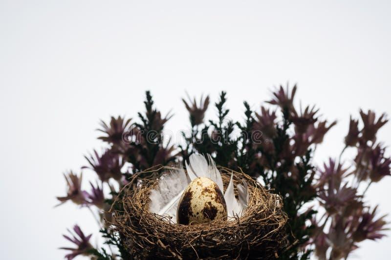 quail för ägg ett arkivfoto