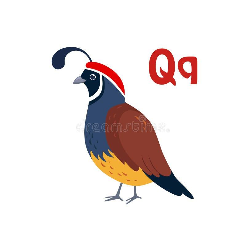Quail. Funny Alphabet, Animal Vector Illustration. Quail. Funny Alphabet, Colourful Animal Vector Illustration royalty free illustration
