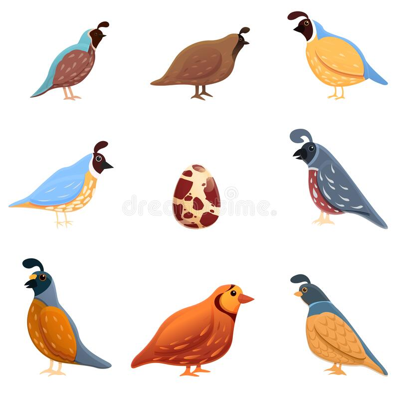 Free Quail Icons Set, Cartoon Style Royalty Free Stock Photography - 179033397