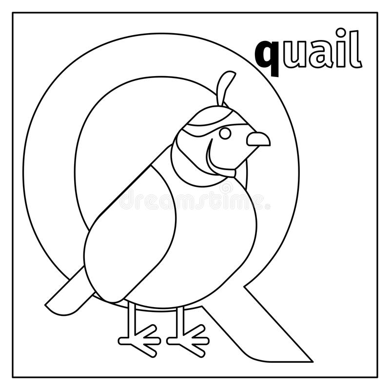 download quail letter q coloring page stock vector illustration of cartoon alphabet - Coloring Page Q