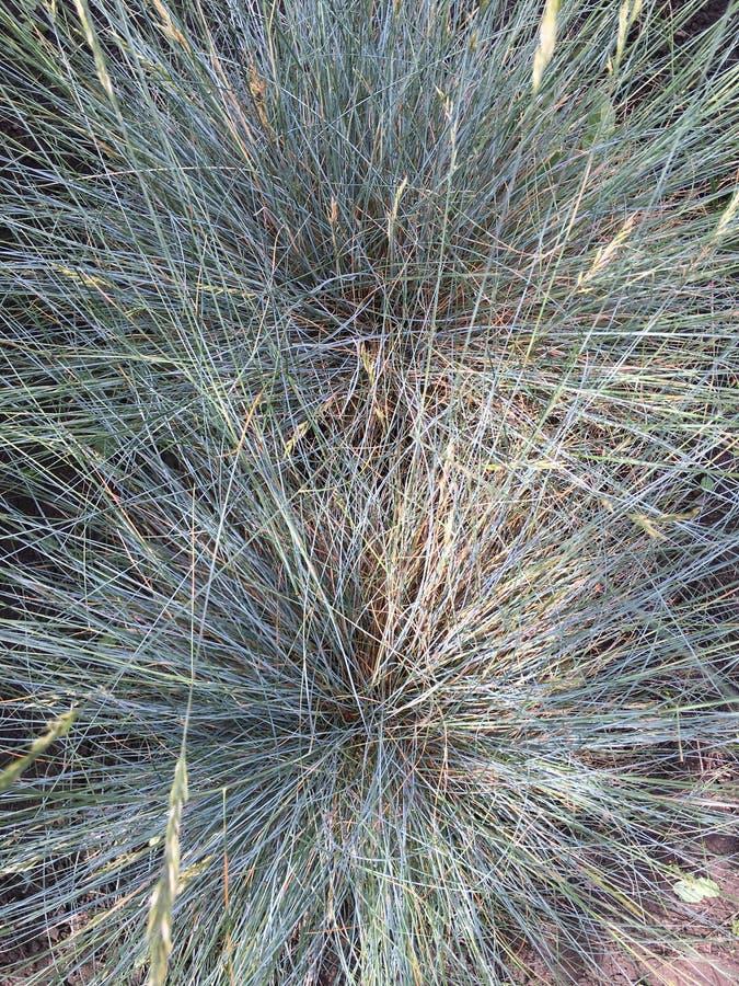 Quaint grass stock images