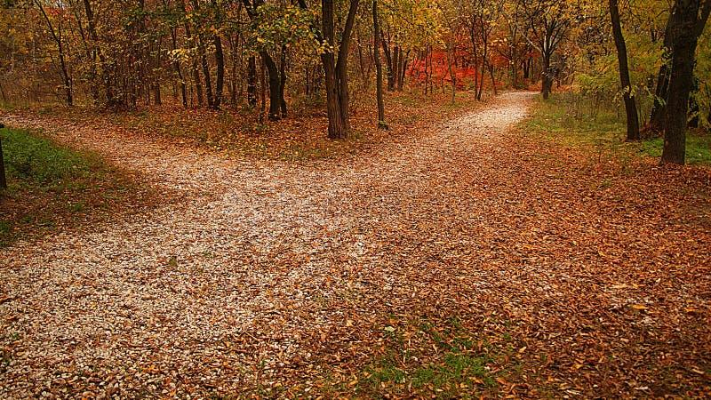 Quale strada dovrei scegliere? fotografia stock