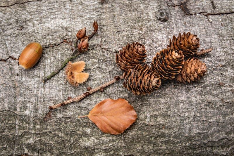 Qualità di autunno fotografia stock libera da diritti