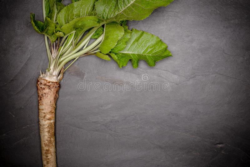 Quality horseradish, black stone background. stock image