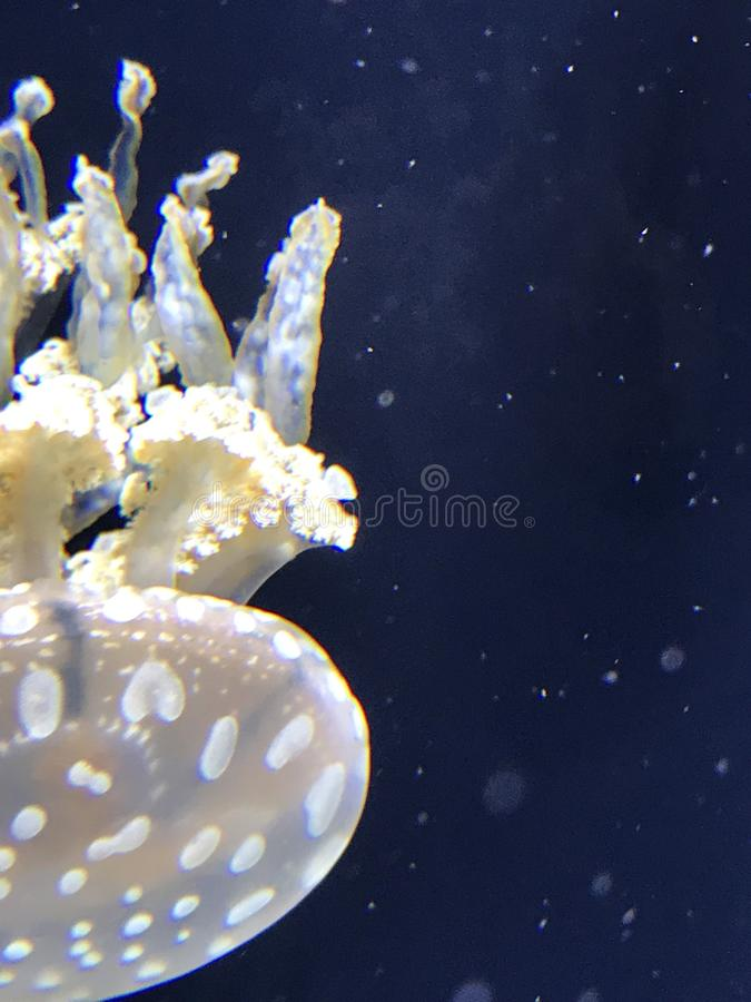 Qualleausstellung an Baltimore-Aquarium lizenzfreie stockfotos
