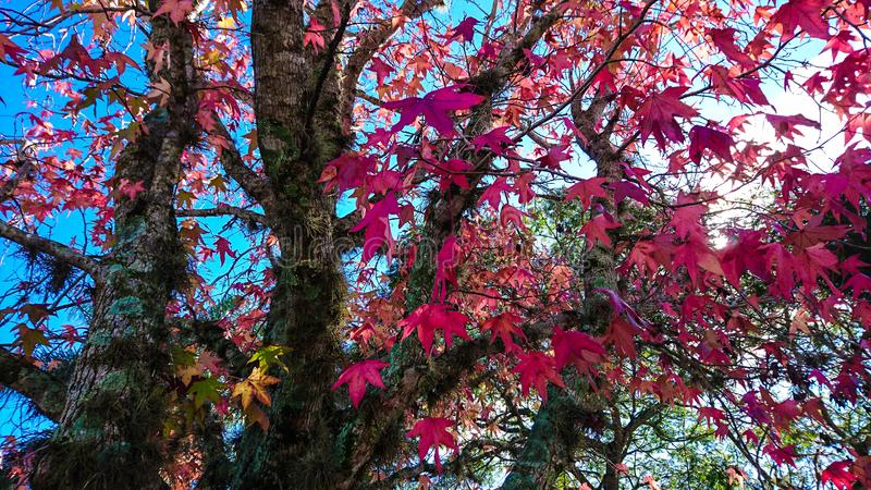 Quand l'automne vient jpg image libre de droits