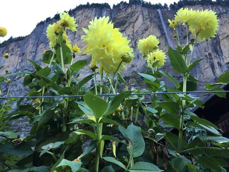 Quand une cascade est vue par les fleurs images stock