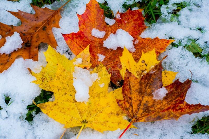 Quando la caduta e l'inverno si scontrano immagine stock
