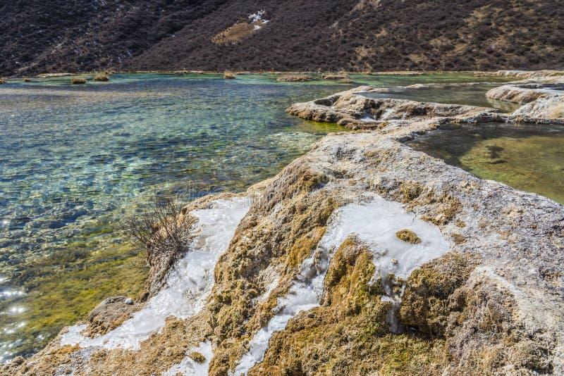 Quanhua dębnik Wapniejący staw zdjęcie royalty free