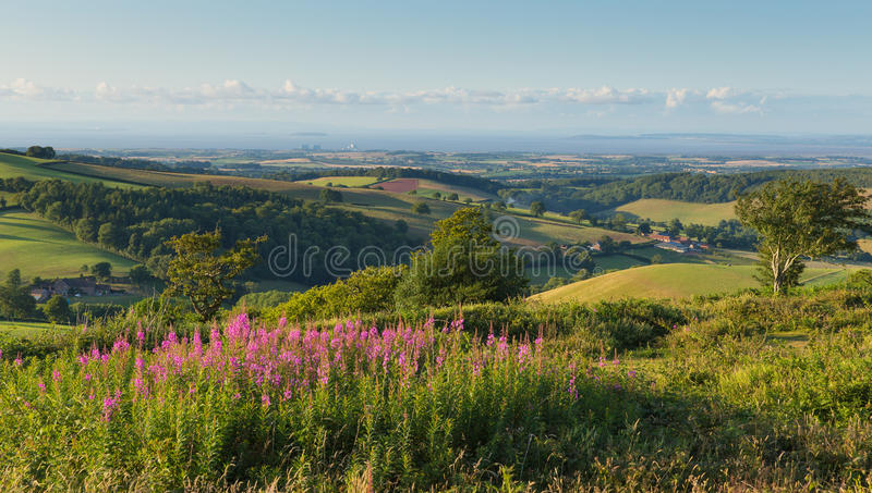 Quantock Hills Somerset England UK countryside views towards Hinkley Point Nuclear Power station and Bristol Channel pink flowers. Quantock Hills Somerset royalty free stock photo