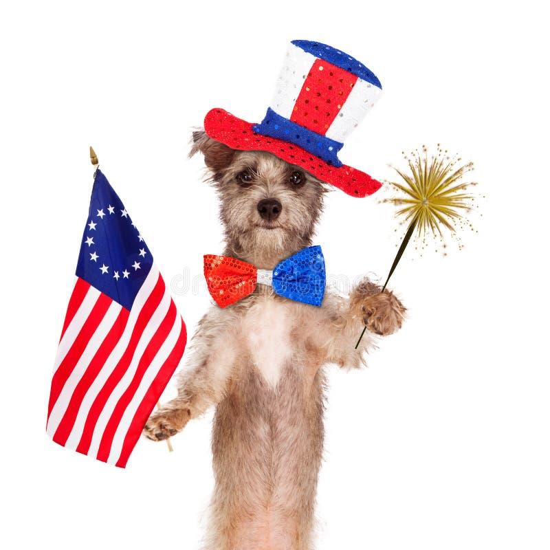 Quarto del cane di celebrazione di luglio fotografie stock