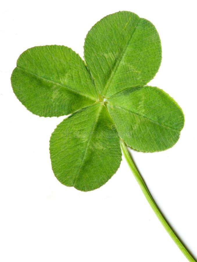Quarto-folha verde foto de stock