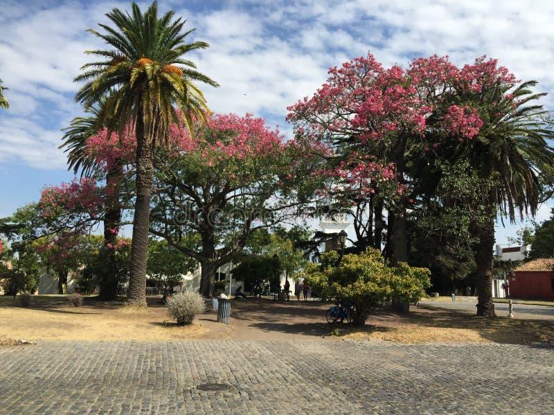 Quarto histórico da cidade do del Sacramento de Colonia foto de stock royalty free